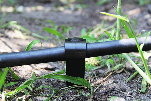 5-Placez votre tuyau, et maintenez le à l'aide d'un crampon de sol. arrosage goutte à goutte